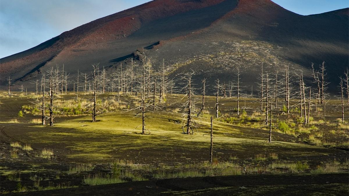 Мертвый лес, фото: Владимир Горбачев
