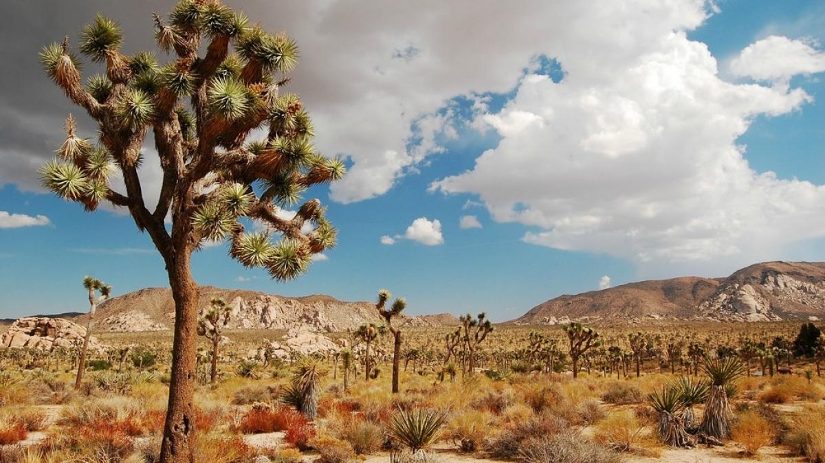 Национальный парк Joshua Tree