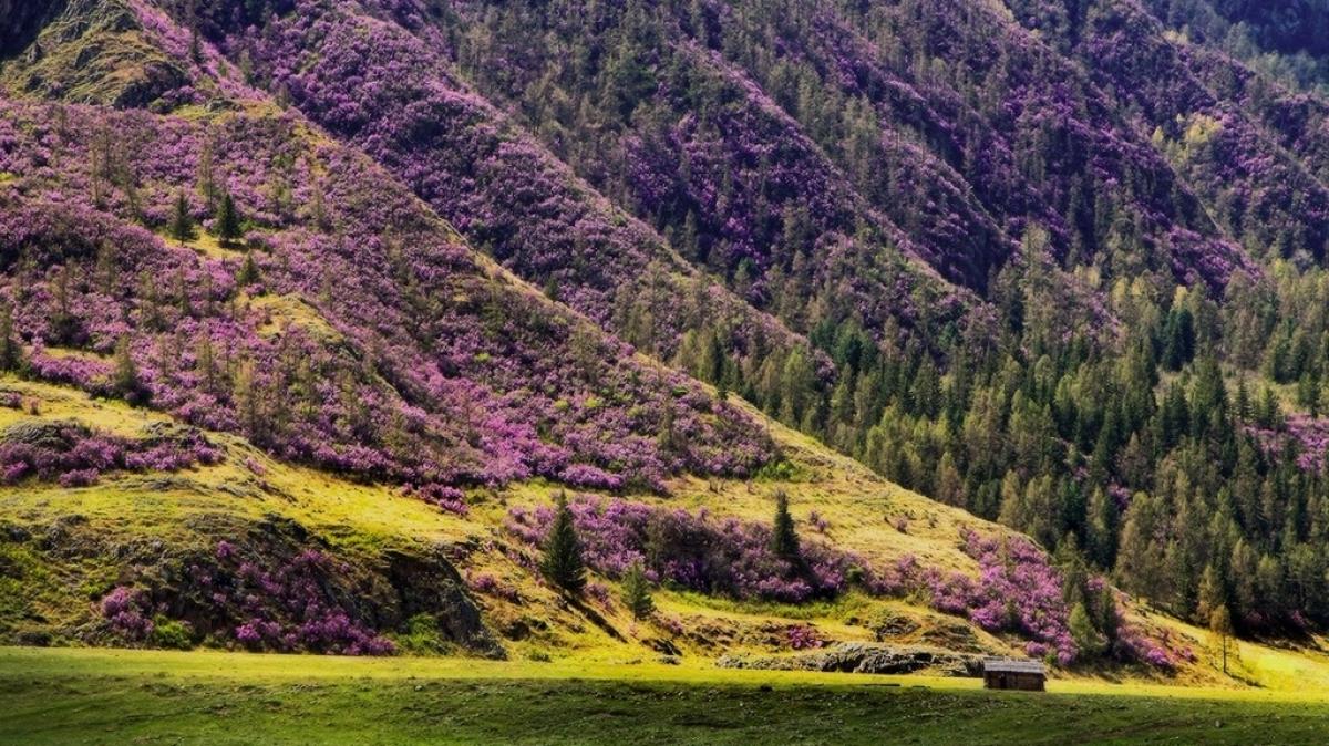 цветущий склон