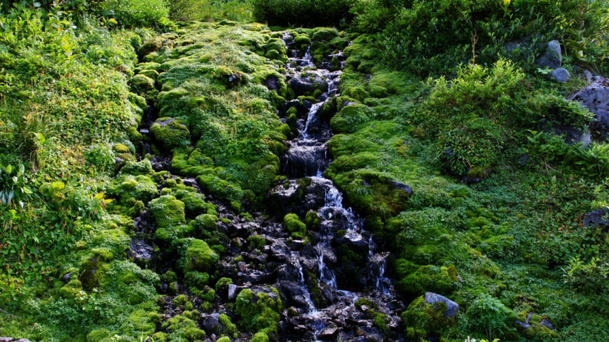 Вдоль реки, фото: Виктор Поляков