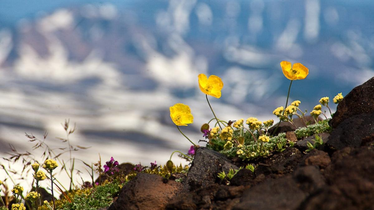 Авачинский вулкан, фото: Степанов Илья