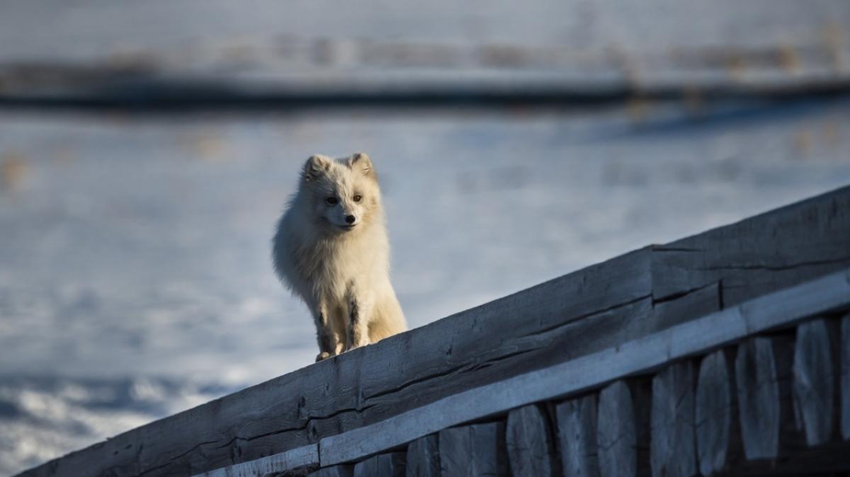 Фото Сергея Доля