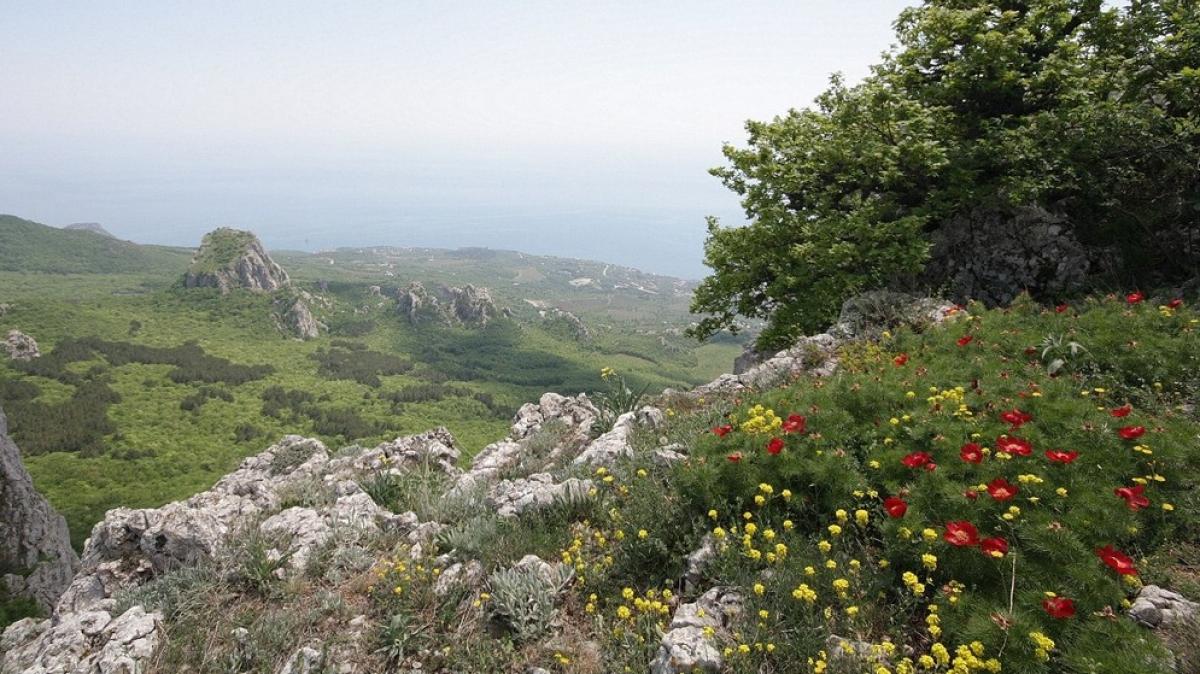 Крым в мае необыкновенно цветет!
