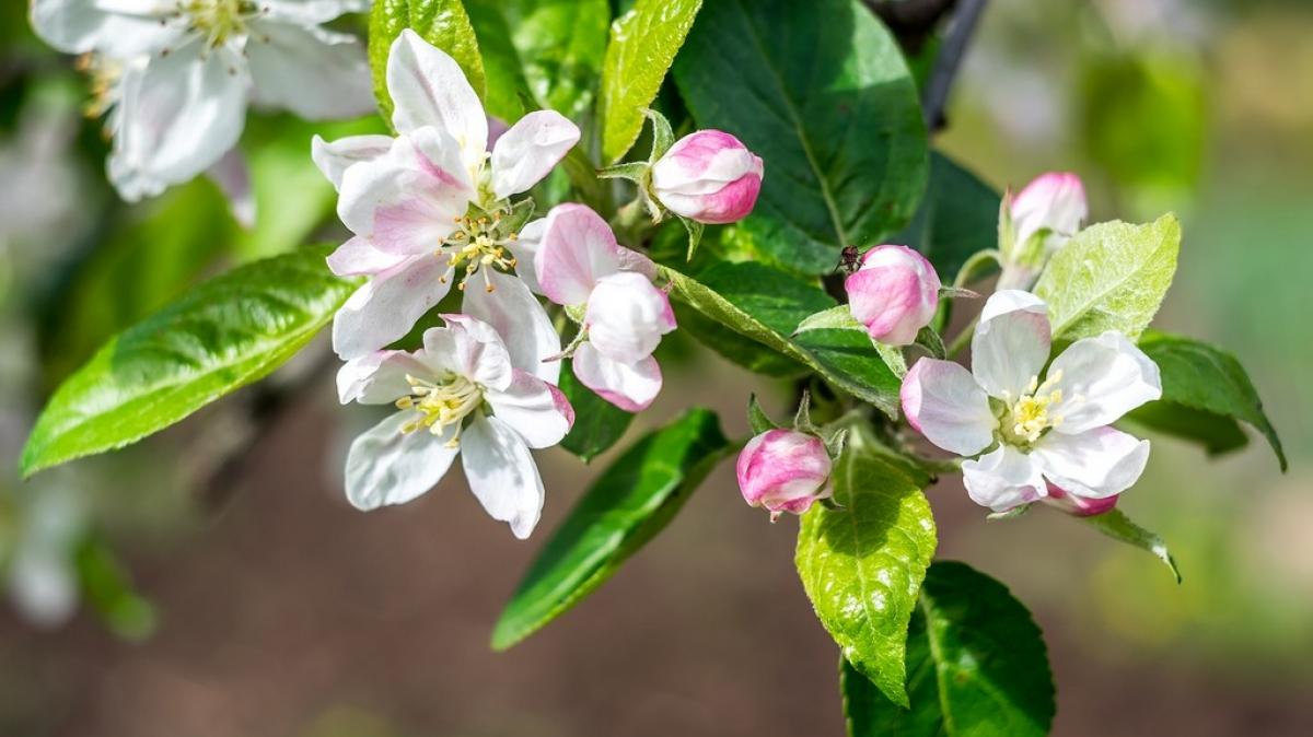 Весна пришла в Адыгею, фото нашего Странника: Дмитрия Кочерыгина