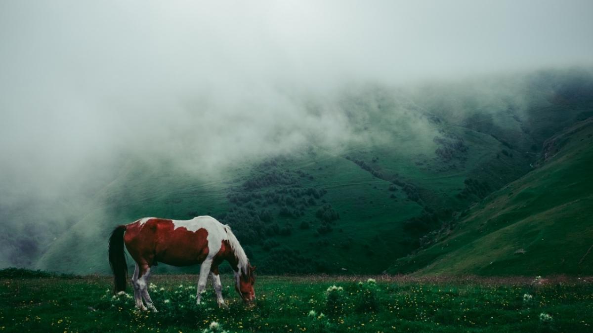 Photo by Timur Kozmenko on Unsplash