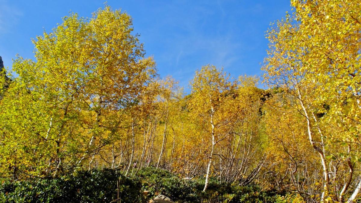 Фото: Владимир Давыдов Источник: www.tourister.ru