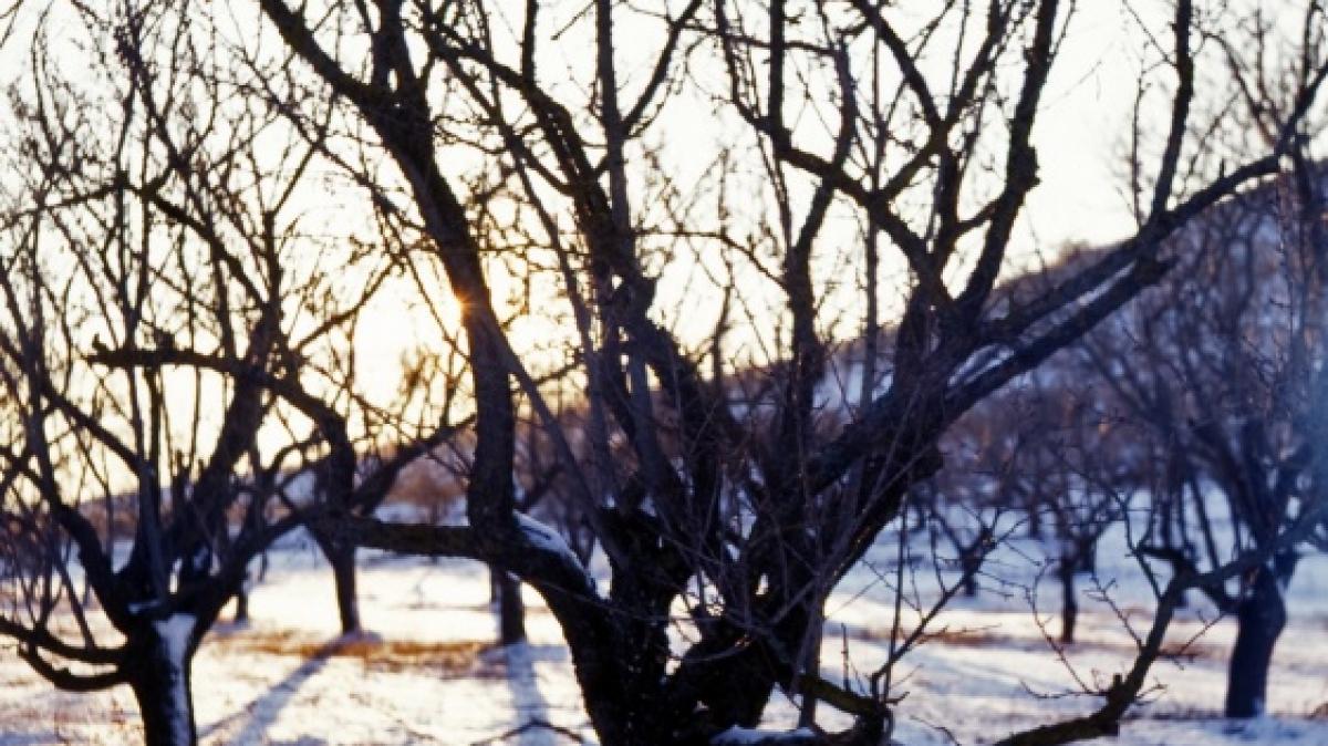 Фото: qwz, visualhunt.com