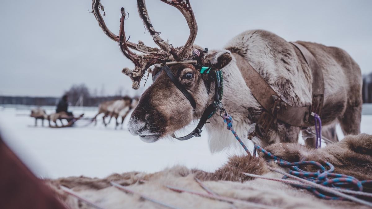 Photo by Arseny Togulev on Unsplash
