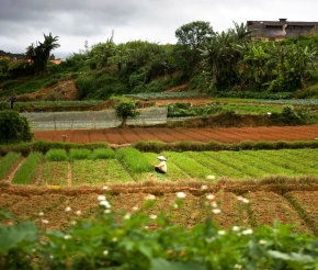 Ферма Да Лат