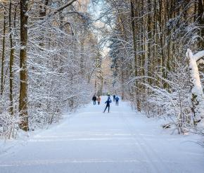 Лыжня в Битцевском парке