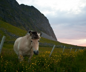 фото: Jon Olav
