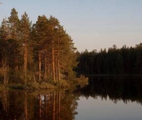 Лесные берега