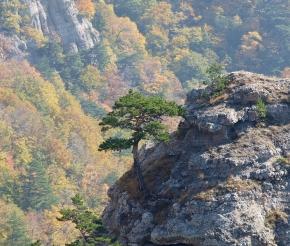 Автор: МИХАИЛ ВОЙТЕНКО. Источник: www.moya-planeta.ru