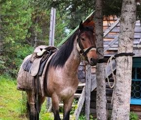 Алтайская лошадка