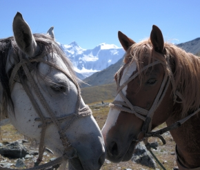 Лошади на перевале