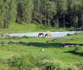 кони на р. Кучерла