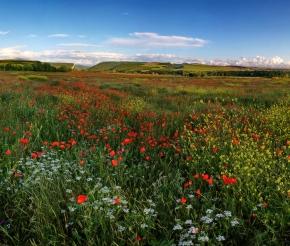 Цветущая долина Качи-Кальон, фото: Максим Гайдученко