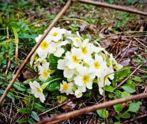 Весна пришла в Адыгею, фото: Сергей Филькин