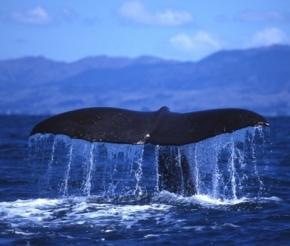 Большое счастье - увидеть вживую кита!