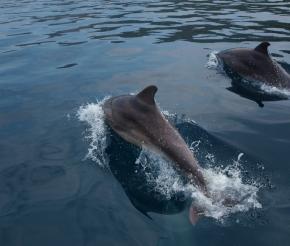 Дельфины очень близко!