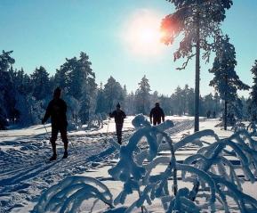 Январская лыжня