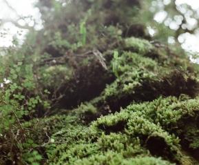 Эльфийские деревья.