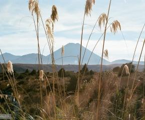 Вид на вулкан Тонгариро.