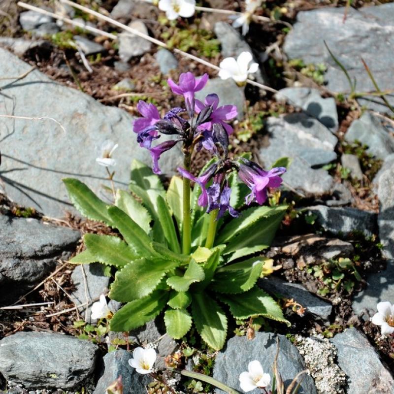 Цветы высоко в горах
