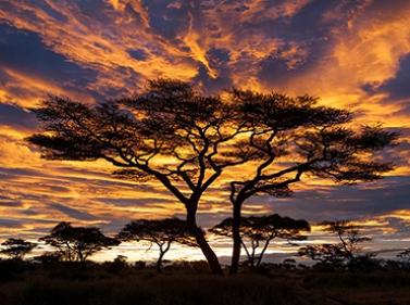 Танзания: сафари, горы и пляжи Занзибара