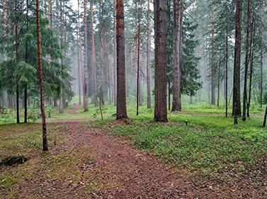 Тайны родных лесов Подмосковья