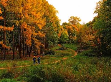 Треккинг по подмосковному лесу вЗахарово