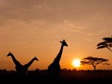ЮАР: целый мир в одной стране + 3 дня в Зимбабве (с рус.гидом)