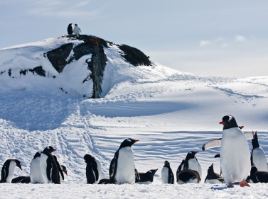 Активные приключения в Антарктиде (Круиз)