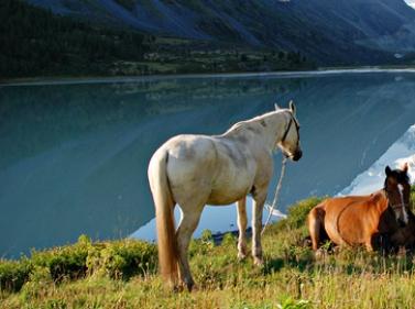 Большой конный тур к Белухе + Сплав