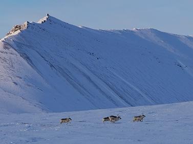 Шпицберген: от Свальбарда до Груманта (на снегоходах)