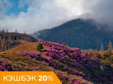 Весенний Алтай (лайт)