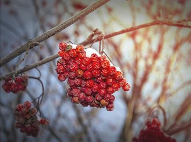 Зимний день в Ближней Мещёре