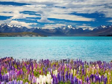 Новая Зеландия и Австралия за 15 дней